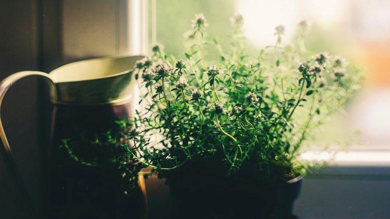Le migliori piante anti inquinamento per l'ufficio e la casa